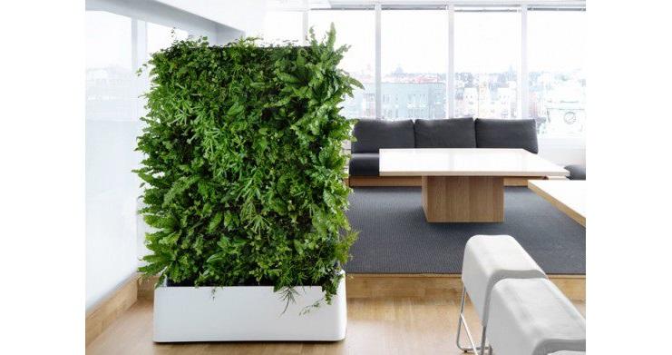 Il Verde in Ufficio con Piante e Pareti   Riganelli Magazine