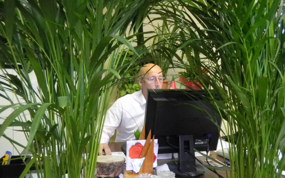 Piante Ufficio Stress : Con le piante in ufficio si lavora di più e meglio ok salute e