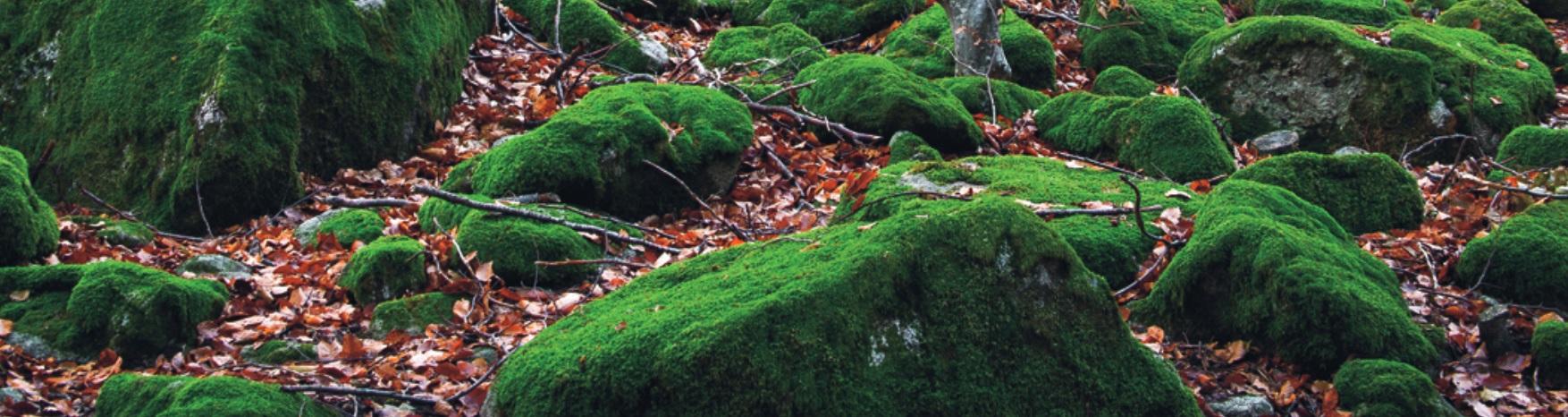 Arredo Green: il verde verticale del Design e del Benessere