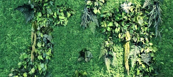 Aspetti positivi del Verde Verticale